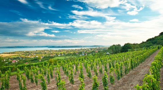 vineyards-2